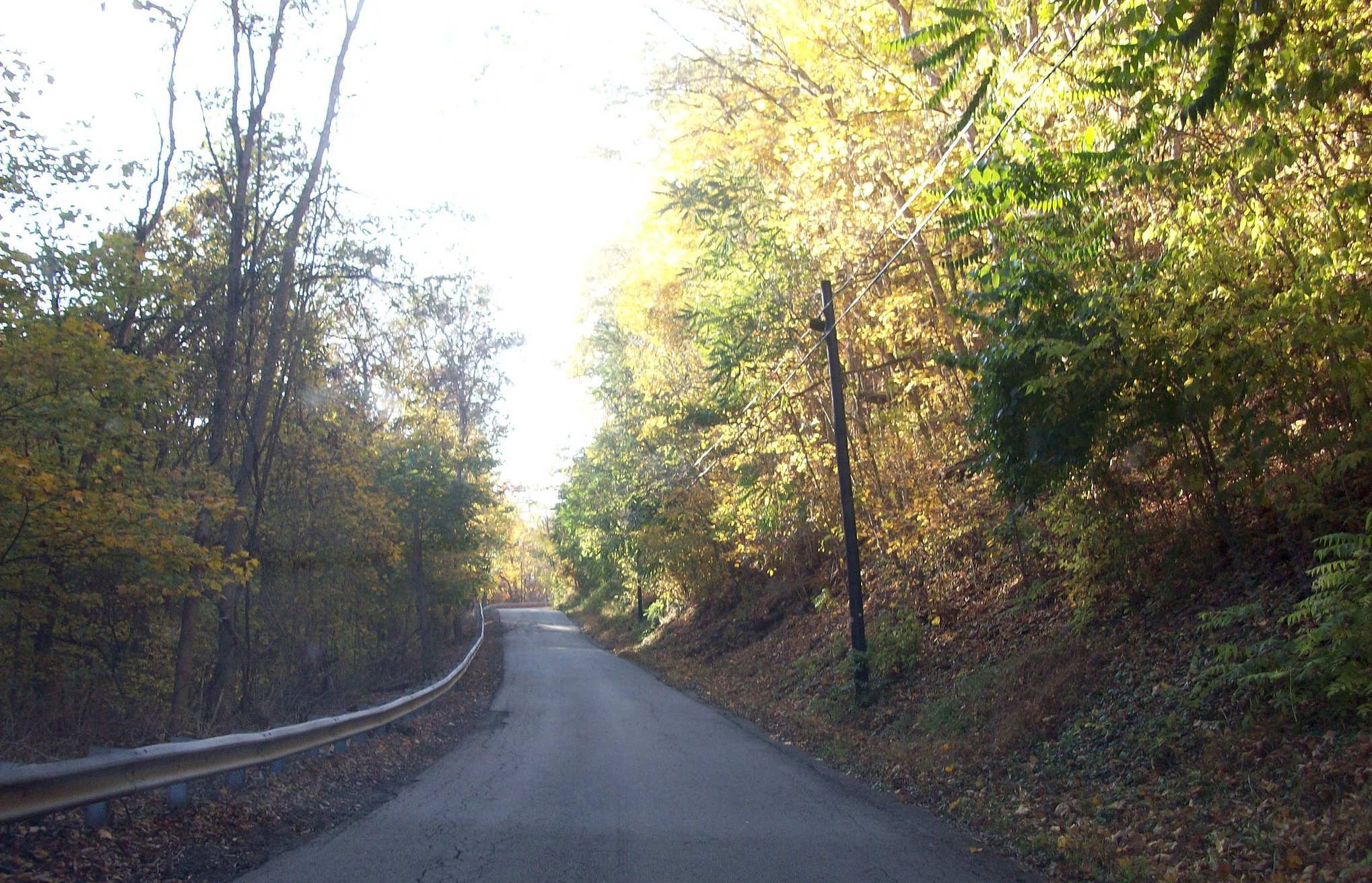empty rural road surrounded by trees